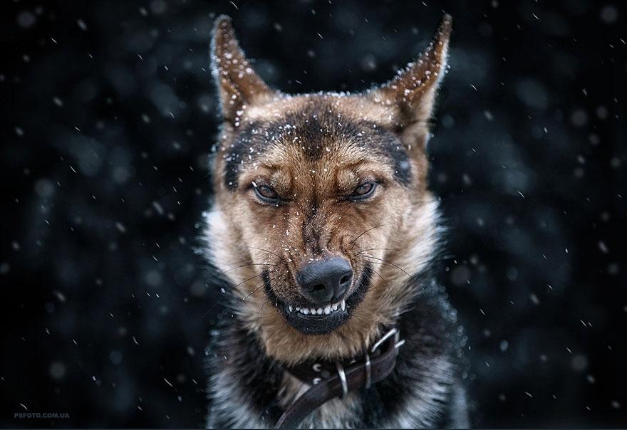Stunning Animal Portraits By Ukrainian Photographer Sergey Polyushko